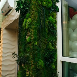 зеленая стена из мха