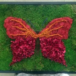 Панно из стабилизированных цветов бабочка