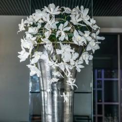 орхидея стабилизированная