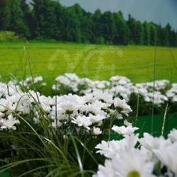 romashkovoe-pole-prodekspo-3
