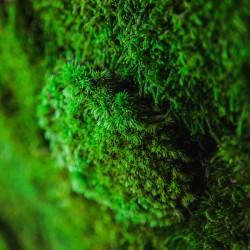стабилизированный мох в интерьере