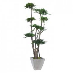 Стабилизированное дерево, Кипарис, высота: 160 см.