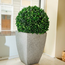 Стабилизированное дерево, Питтоспорум шар, диаметр: 60 см.