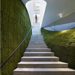 зеленая стена в квартире