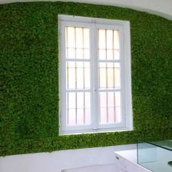 зеленая стена из из плоского мха