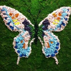 бабочка из стабилизированного материала